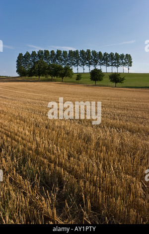 Perfect arrangement of trees with new harvest in the foreground - Stock Photo