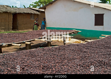 Fermented cocoa beans drying in African village, Ghana West Africa - Stock Photo