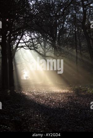 Sun shining through the trees in Kingswood, Sanderstead, Surrey - 3 - Stock Photo