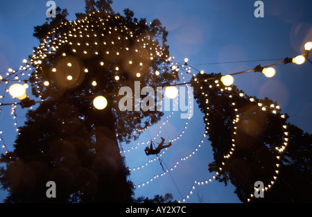 Workman in safety harness abseiling from a branch to fix Christmas Lights on a huge tree - Stock Photo