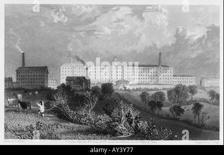 Coton Mill Swainson 1835 - Stock Photo