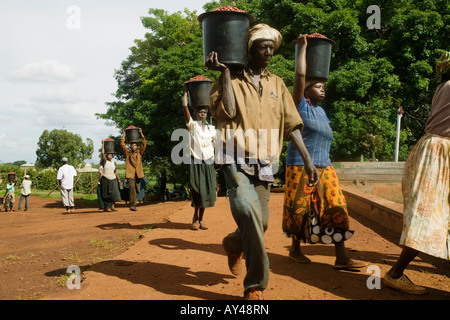 Africa Kenya Ruira Coffee pickers carry buckets of Arabica coffee beans at Oakland Estates coffee plantation - Stock Photo