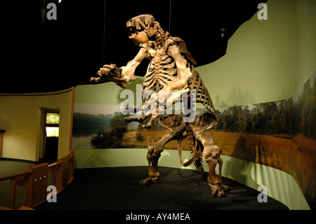 Giant Ground Sloth fossil giant prehistoric mammal North American ground sloth Daytona Museum of Arts and Sciences - Stock Photo