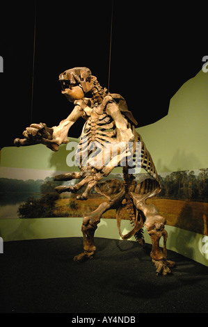 Giant Ground Sloth fossil fierce huge mammal North America Museum of Arts and Sciences.  Daytona Florida - Stock Photo