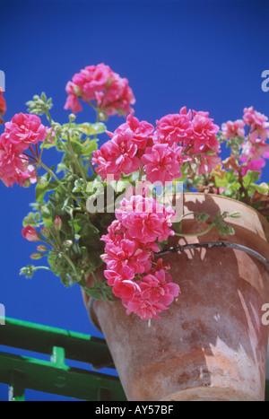 Pink Geranium in terracotta pot blue sky Andalucia Spain - Stock Photo