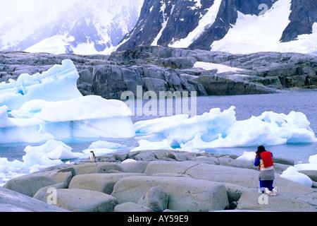 Tourist Admires Adelie Penguins on Petermann Island Antarctica - Stock Photo
