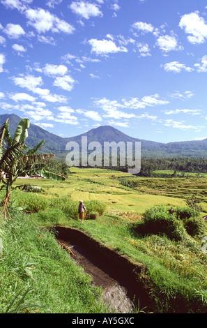 Indonésie Bali Jatiluwih et mont Batukau - Stock Photo