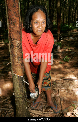 Woman peels latex from tapped rubber tree coconut shell bowl Ko Sukorn island Thailand - Stock Photo