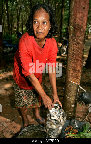 Woman peels latex into plastic collection bag from coconut shell bowl Ko Sukorn island Thailand - Stock Photo