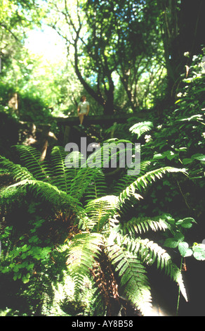 Ferns in Ecclesbourne Glen Hastings Country Park Hastings East Sussex England South Coast Britain UK - Stock Photo