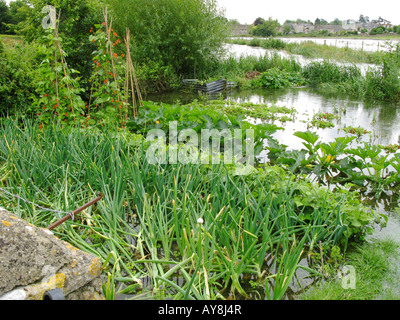 Flooded vegetable garden at Fairford Mill with the River Coln in the background flooding into the adjacent field - Stock Photo
