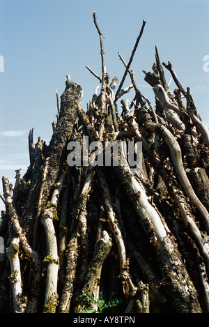 Tree branches in a heap, close-up - Stock Photo