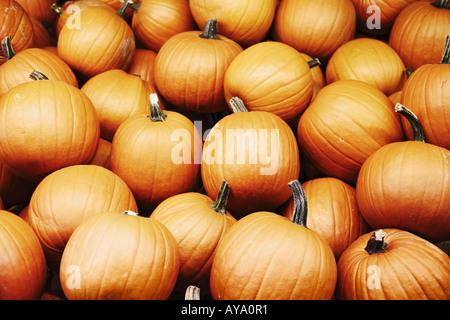Stack Of Pumpkins At Food Market - Stock Photo