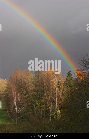 Rainbow above trees in autumn folige - Stock Photo