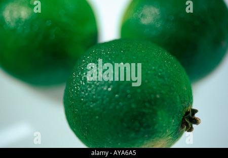 Lime fruits Citrus aurantiifolia Limetten Rautengewaechse Rutaceae Zitrusfruechte citrus fruits Frucht Nahrungsmittel - Stock Photo