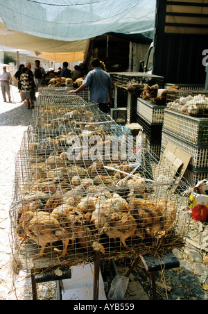 Chicks on sale in cages at Sintra Market Portugal - Stock Photo