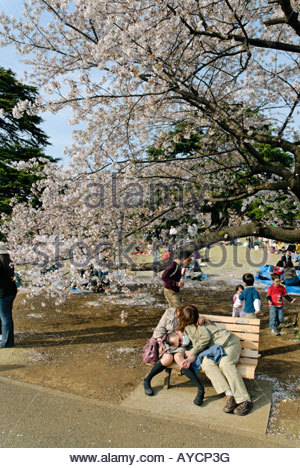 Japanese couple sleeping on a park bench under cherry blossom tree in Shinjuku Gyoen National Garden, Tokyo - Stock Photo