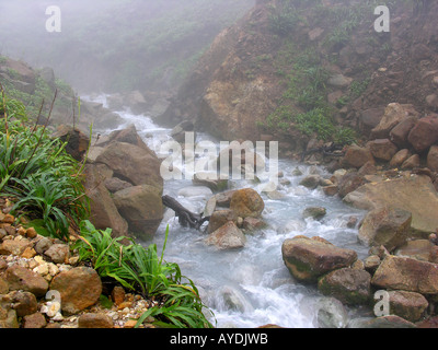 Steaming hot springs are found on the way to the Boiling Lake - Stock Photo