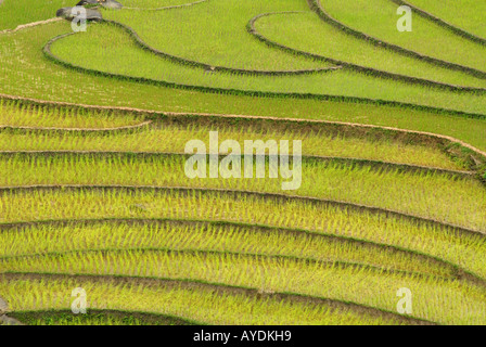 Terraced rice paddies near Sapa in the Hoang Son Mountain range North West Vietnam - Stock Photo