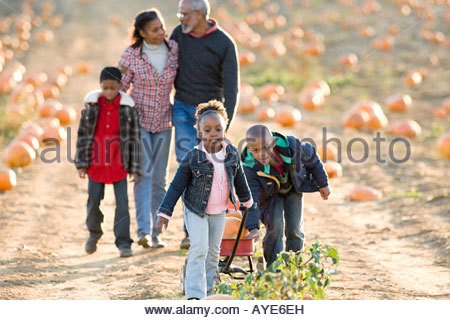 A family walking through a field of pumpkins - Stock Photo