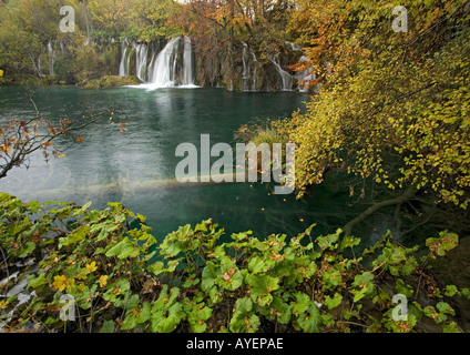 cascades over a dam with butterbur in the foreground, Plitvice National Park, Croatia - Stock Photo