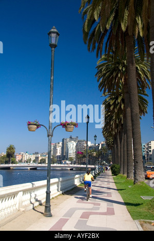 Sidewalk lined with palm trees at Vina del Mar Chile Stock Photo