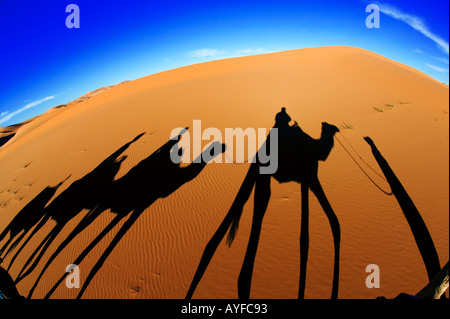 Tourism Shadows cast by a tourist camel trek in the sand dunes of Erg Chebbi area Sahara desert Morocco Model released - Stock Photo