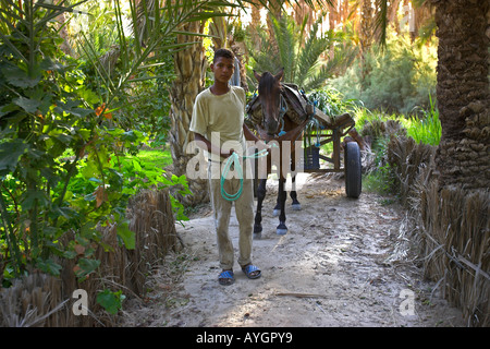 Young man leads horse and cart on palm tree lined track in private plantation Nefta oasis Tunisia - Stock Photo