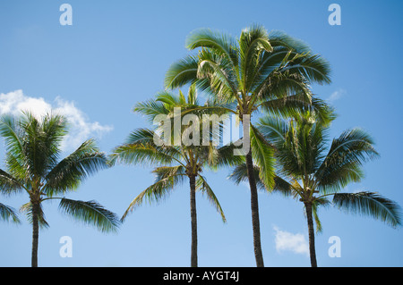 Low angle view of palm trees - Stock Photo