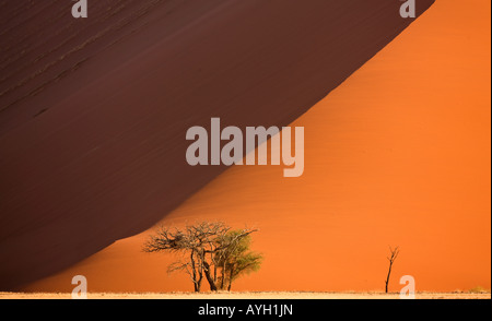 Tree in front of sand dune, Namib Desert, Namibia, Africa - Stock Photo