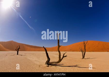 Dead trees, Namib Desert, Namibia, Africa - Stock Photo