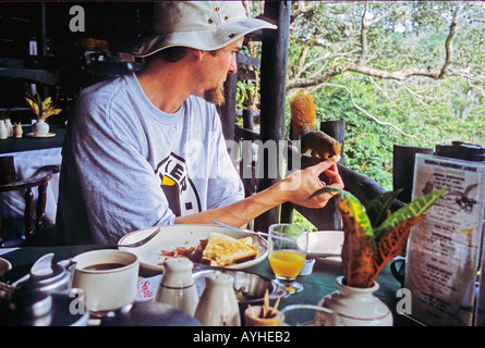 AFRICA KENYA SHIMBA HILLS Tourist feeding breakfast to red squirrel from the open air restaurant at the Shimba Hills - Stock Photo
