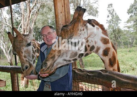 Visitor feeds giraffe at refuge near Nairobi Kenya Africa