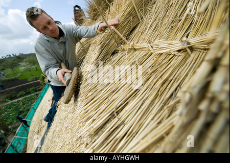 Master Thatcher James Caro uses a 'Leggett' on thatching straw to repair the roof of Anne Hathaway's cottage in - Stock Photo