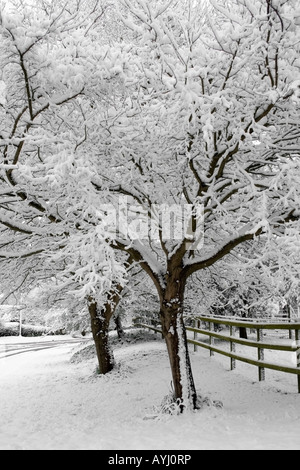 Snow covered trees in April - Stock Photo