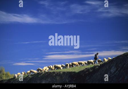 Shepherd at Guadalix de la sierra Madrid Spain - Stock Photo