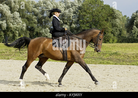 female rider in historical dress on a Bavarian horse - Stock Photo