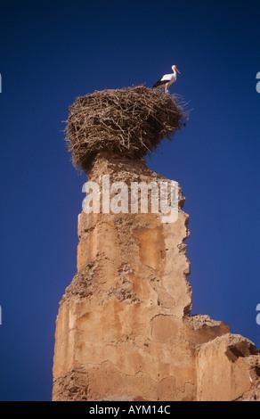 El Badi Palace Stork on nest Marrakesh Morocco - Stock Photo