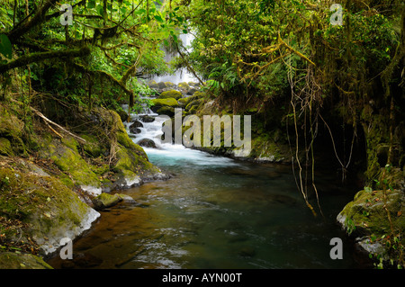 Thick tropical rainforest jungle and stream with waterfall at Poas volcano La Paz Gardens Costa Rica - Stock Photo