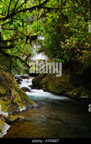 Tropical rainforest jungle stream with waterfall at Poas volcano La Paz Waterfall Gardens Costa Rica - Stock Photo