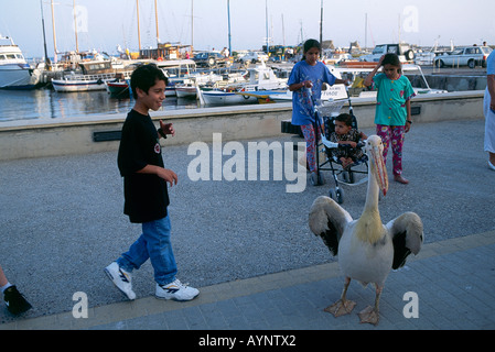 A pelican entertains a group of children on the harbour wall with rows of fishing boats and pleasure craft moored - Stock Photo