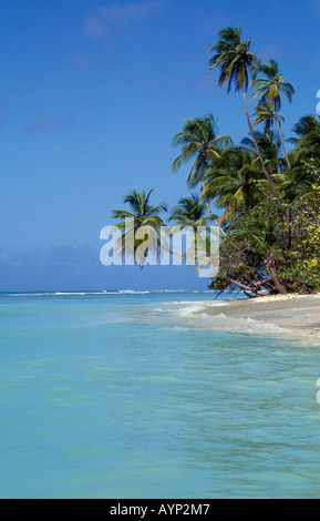 WEST INDIES Caribbean Tobago Pigeon Point View along sandy coconut palm tree lined beach. - Stock Photo