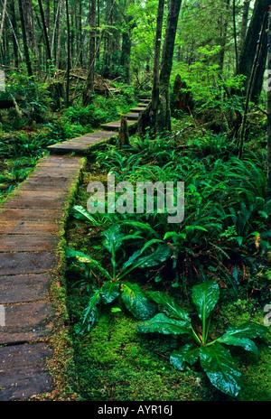 Wooden boardwalk going through temperate rainforest, Olympic National Park, Washington, USA - Stock Photo