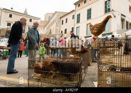 Poultry sold at the farmer's market in Sineu, Majorca, Balearic Islands, Spain - Stock Photo