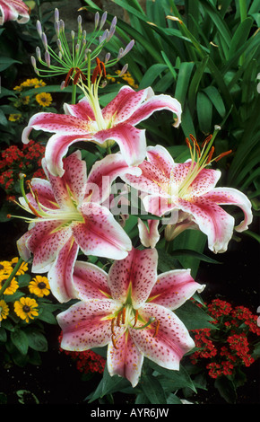 Flower in The Bloedel Conservatory Queen Elizabeth Park Vancouver Canada - Stock Photo