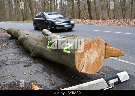 Fallen tree on the side of a road, damage after a storm in Hesse, Germany - Stock Photo