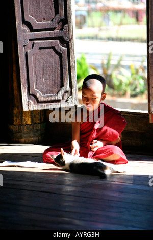 Young Buddhist monk playing with cat, Burma (Myanmar), Southeast Asia - Stock Photo