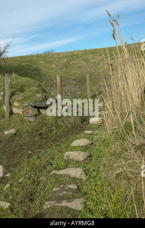 Stone path in country side, Courtmacsherry, West Cork, Ireland - Stock Photo