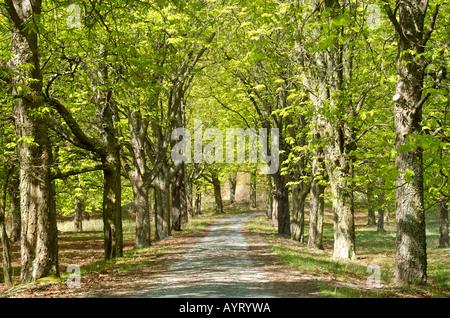 Nationalpark Kellerwald Edersee Germany - Stock Photo
