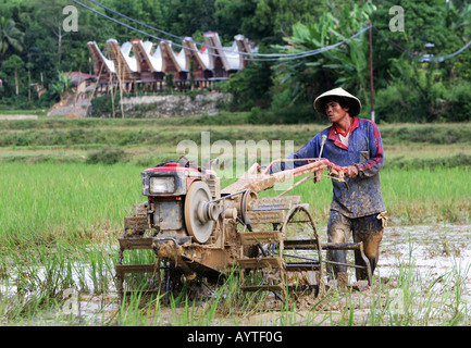 Indonesia, man plowing rice field with a tractor, Sulawesi Island near Rantepao - Stock Photo